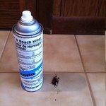 Bug spray under sink too!