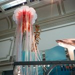 jelly fish and shark hanging