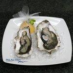 Photo of Palau Fish