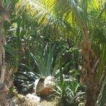 jardin des iguanes