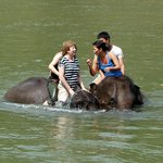Bathing with elephants in river