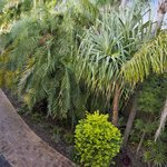 Sundancer Gardens Pathway Rear of Resort Grounds