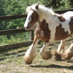 Roan- una pony stupenda