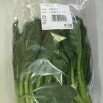 買った野菜(縮小松菜)