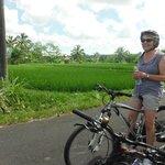 gorgeous rice paddys