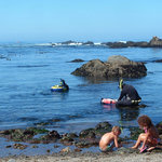 Abalone Diving & Playing on the Beach!
