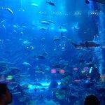 The aquarium at the Dubai Mail