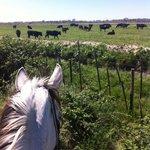 Promenade à cheval (à faire avec Heidi)