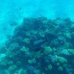 на этом корале два кузова живет