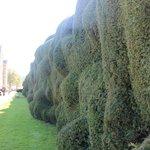 An unusual hedge