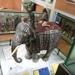 Armadura para elefante