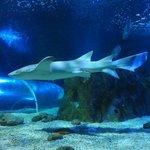 Ein Hai über dem Plastiktunnel