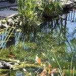 The koi pond.
