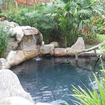 one of the hot springs on the property.