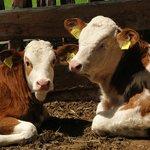 Tiere am Bauernhof - Weberhof