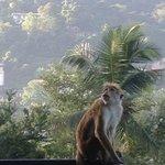 singe sur notre terrasse pas gêné du tout