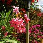 Colorful flowers surround the villas