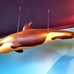 Killer Whale Calf Yamani