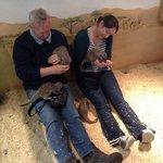 feeding the Meerkats