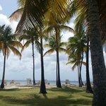 La plage sous les cocotiers
