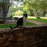 The view from our patio and one of the kitties who live on the grounds! So friendly!