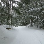 Snowshoeing deep in the Muskoka woods