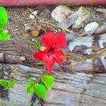 Flower at the Villas