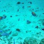 Barrier Reef!
