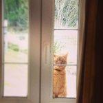 le maître des lieux, Garfield.