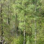 Blick vom Zimmer aus in den Frühlingsbirkenwald