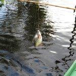 passeio pescaria de piranha
