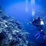 Mai Dive - Astrolabe Reef