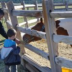 Feeding one of the horses