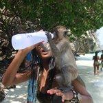 Monkey Island, they were so tame.