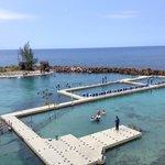 Dolphin swim area