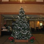 Christmas tree in front lobby