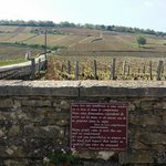 Romanee-Conti Grand Cru Vineyard - the goldmine