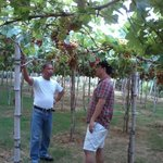 Grape lecture during farm tour