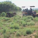 enjoying the tractor ride on the Safari Guided tour #Safari Ostrich Farm