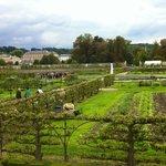 Le Potager du roi à Versailles