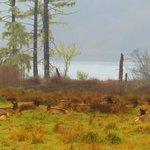 Elks Still Resting !