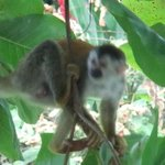 Monos de visita