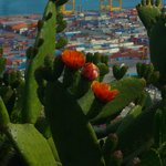 Le port de Barcelone (citadelle de Montjuic)