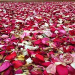 Lying in a bed of roses!