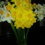 Nargis flowers