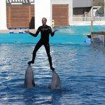Lo spettacolo dei delfini