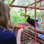 Feeding a Toucan