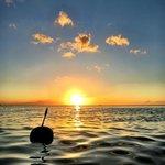 Coconut adrift,