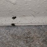 Gnats on the ceiling and wall of shower