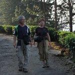 promenade dans les plantations de thé
